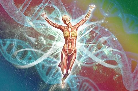 Anatomie en energie